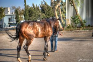 HDR Horse by ZQPhotography