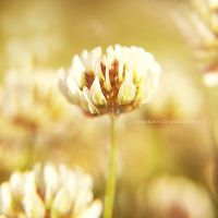 KHNH by impatienss