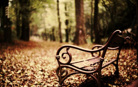 Abandoned bench in the forest by adanm