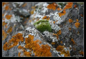 Life on rock by erman-y