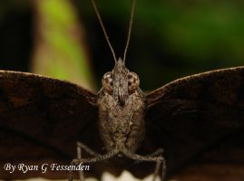 Portrait of a Butterfly 1 by Fezzgator