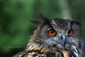 Bright Eyes by Alcamin