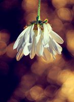 Spring sprang from the winter by GlareUsy