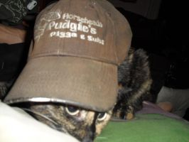 Cat and Hat Equals by Masani