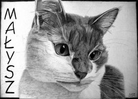 In loving memory of Malysz Kitty by Ralph1989