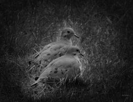Loving doves by gintautegitte69