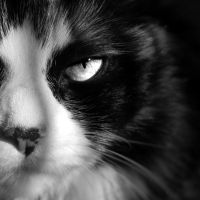 Smize. by xXcherushiiXx
