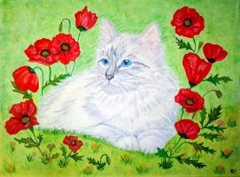 Poppies by Dreva