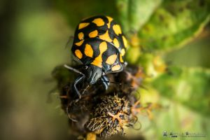 Beatle Climbing a plant by abravewolf