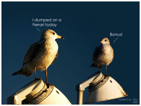 Seagull Talk by dinyctis