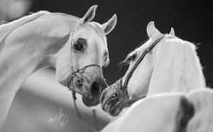 Horse Beauty by BahiMashat