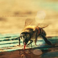 Bee Bee 1 by 3aish