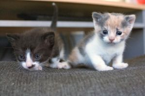 Two Kittens by fire-camel