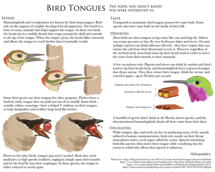 Science Fact Friday: Bird Tongues by Alithographica