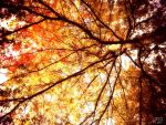 autumn tree by apfelsaft337