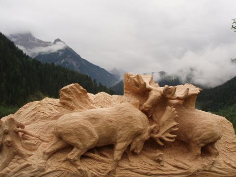 Bull fighting in progress4 by woodcarve