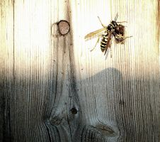 Wasp_Color. by chriptik