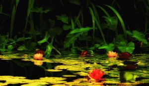 Water Lilies V by Bartonbo