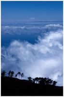 Madeira - Trees vs Clouds by damnengine
