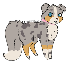 Puppy Auction~ Blue Merle by mangojellygirl