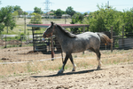 Blue Roan Stock 18 by tragedyseen