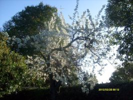 Plum Tree - 2012 by HikaruLuvkaoru