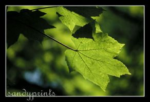 Green leaf by sandyprints