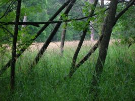 Skeletal Ruins of a Stick Fort by openmeadow