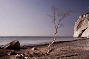Chalk Tree by Freacore
