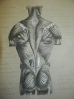 Muscle Anatomy Rear by RDVious