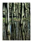 Wood on Water by a-guy-with-a-camera