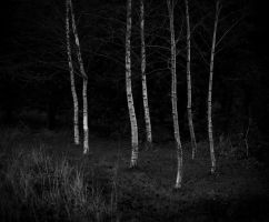 birch by kenic