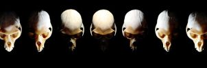 Monkey skull phases by Meddling-With-Nature