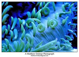 Sea Anenome 01 by GetMadBaby