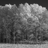 IR Trees #1 by perost