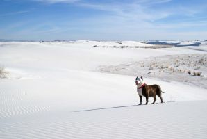Dexter and the white sands by vicariou5