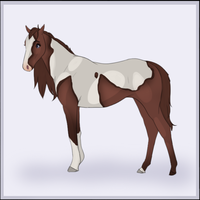 Paint - Mare  - Adoptable by Fish-Creek-Ranch