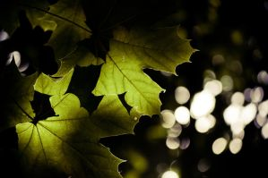 light and leaves by torobala