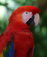 parrot    2 by mf122792