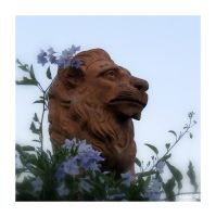 Lion and flowers by Hubert11