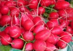 Radishes by Kitteh-Pawz
