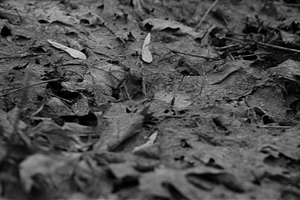Forest Floor 3 by AndroAlexander