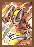 Wolverine ACEO 101812 by ChrisMcJunkin