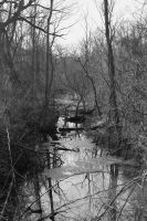 Stream at Sand Run b and w by coffeenoir