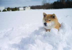 Snow dog by marustagram