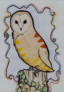 Sun the Barn Owl by Xbox-DS-Gameboy