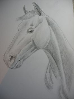 watching you by horse-art-here