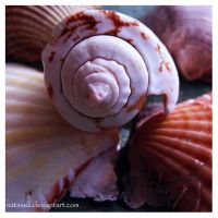 Sea shells by Natasek