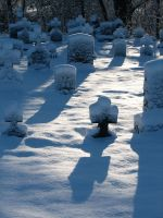 Calvary Cemetery in December by rayc33
