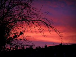 Winter sky glory (2) by April-Mo